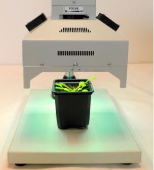 便携式 FluorCam FC 1000-H/ GFP叶绿素荧光成像仪